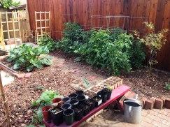 the veggie garden & pomegranate tree